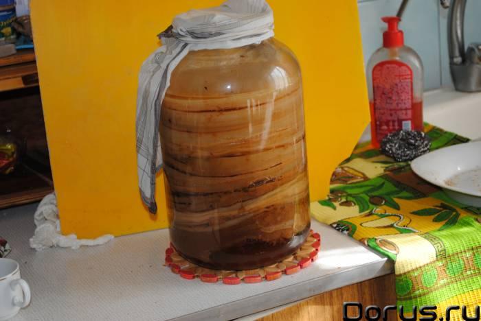 Чайный гриб - лекарь в банке - Растения комнатные - ЧАЙНЫЙ ГРИБ Настой чайного гриба при-меняется пр..., фото 1